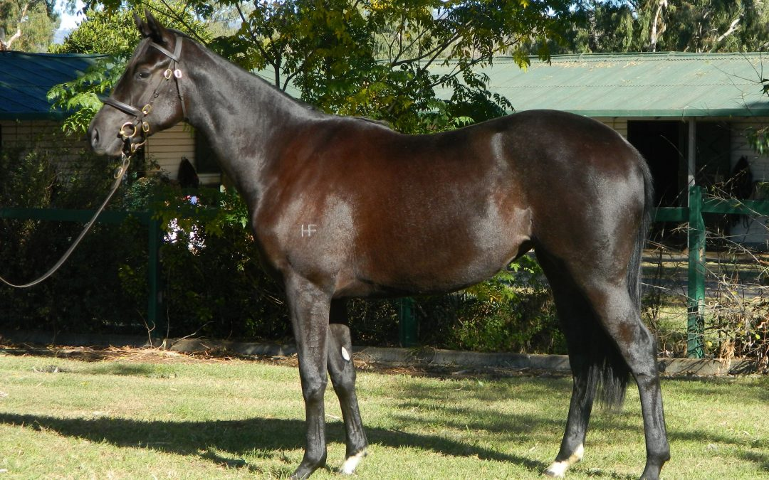 Showcasing filly fetches highest price for sire in 2019