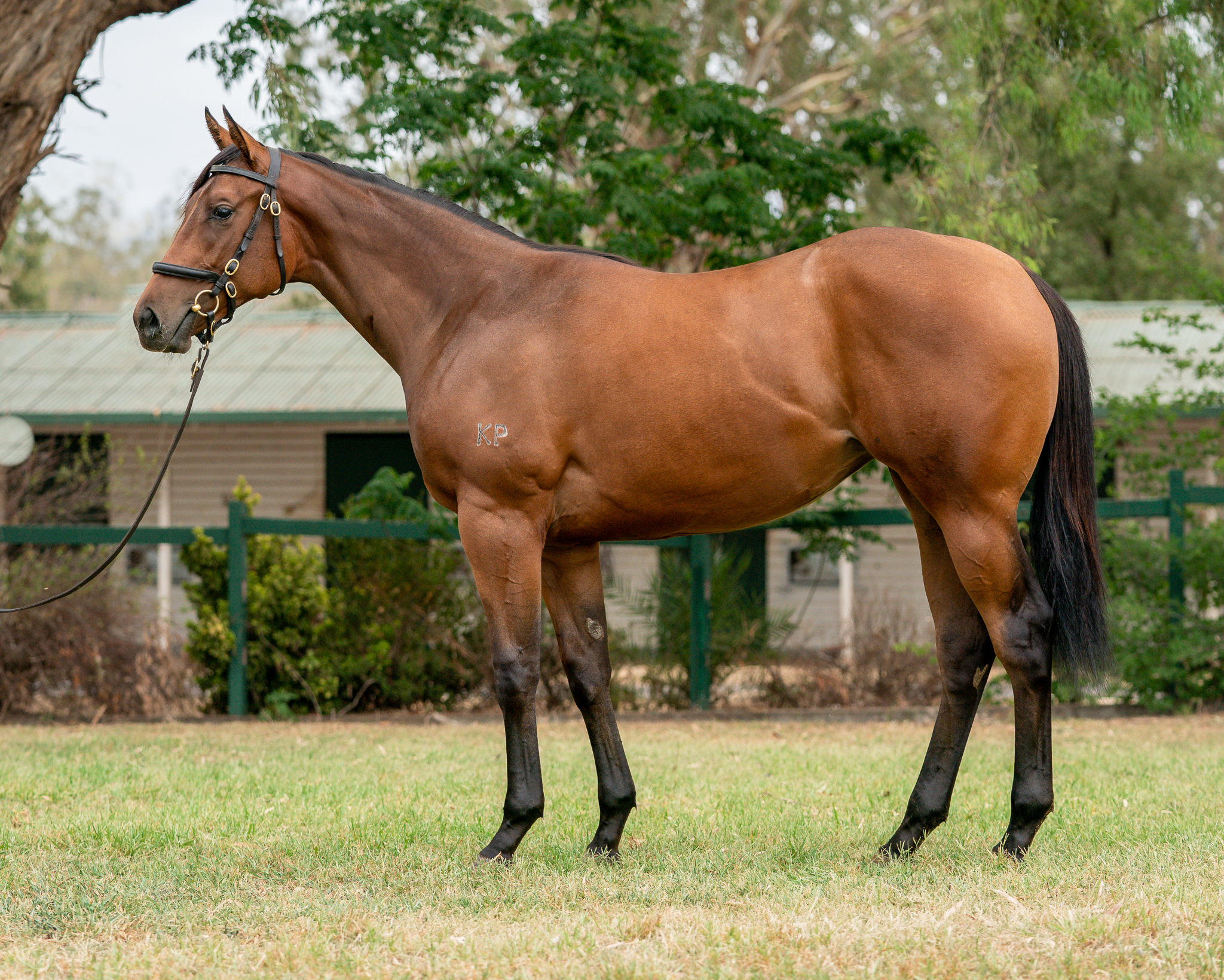 I Am Invincible x Augusta Proud filly