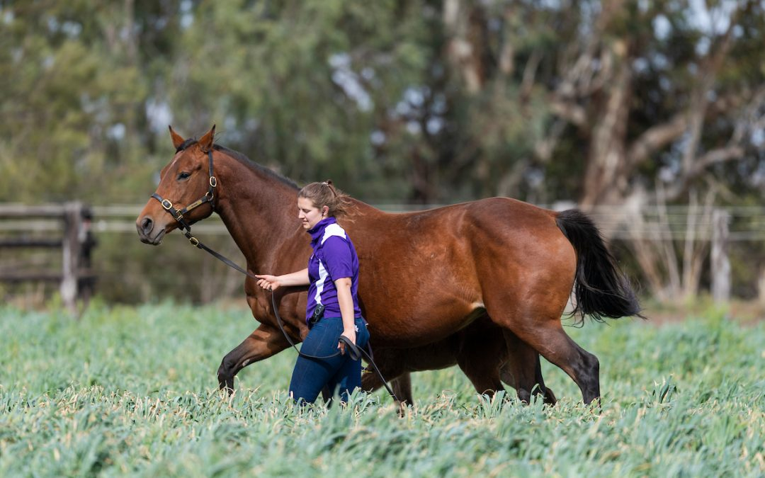 Raffles Farm reduction bolsters Bhima's Australian Broodmare draft