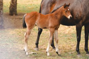 Exceed And Excel x Lady Krovanh colt