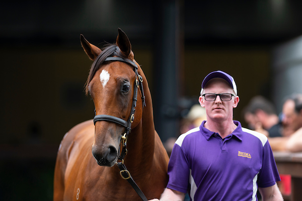 Redoute's Choice yearling provides fireworks for Bhima